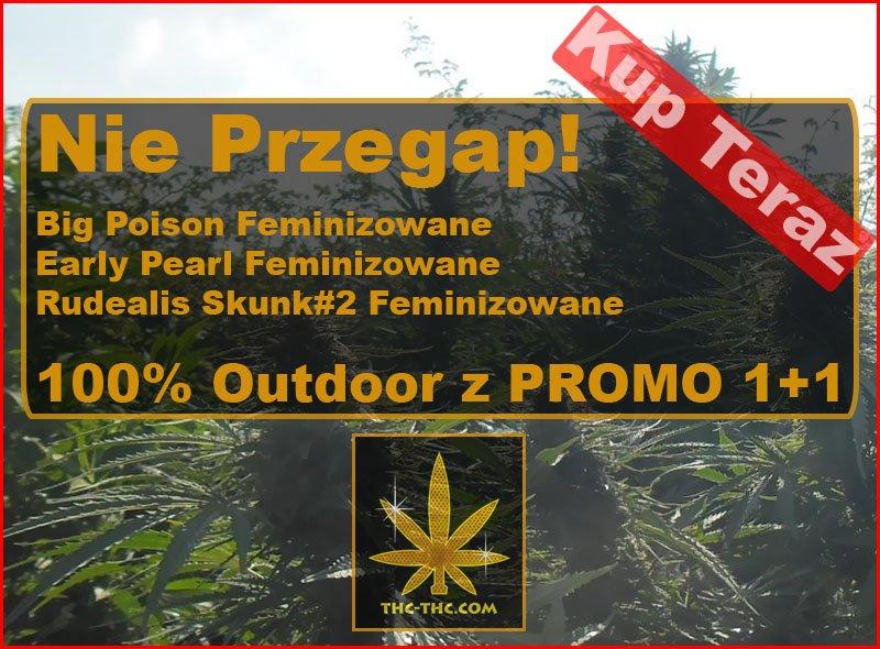 nasiona marihuany, nasiona konopi, outdoor, promo, promocje, 1 plus 1
