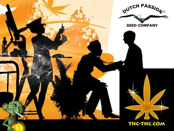 medyczna marihuana, cbd, auto, odmiany, dutch passion