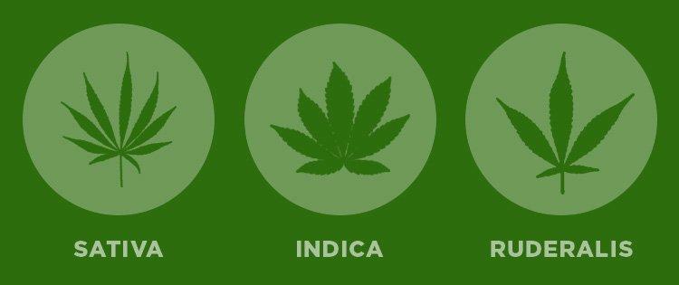 Indica, Sativa, Ruderalis