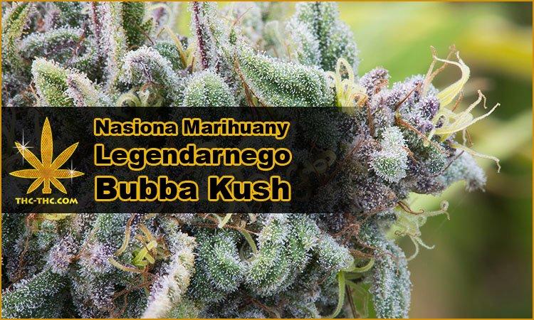Nasiona Konopi, Nasiona Marihuany, Legendarne, Odmiana, Bubba Kush