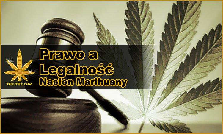 legalność, prawo, posiadanie, sprzedaż, nasiona marihuany, nasiona konopi