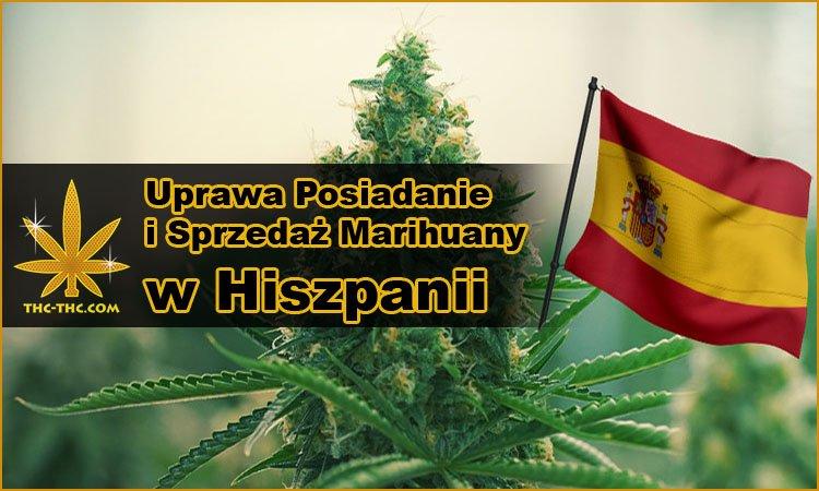 prawo, hiszpania, marihuana, konopie, uprawa, posiadanie, sprzedaż
