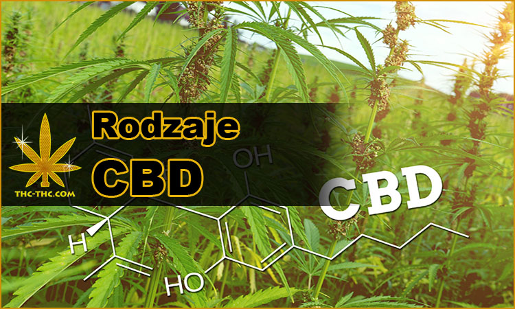 CBD, Konopi, Przemysłowej, Cannabis, Różnice