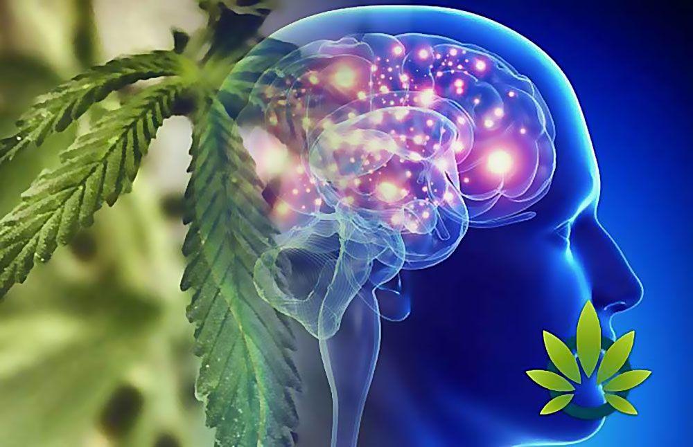 Medyczna, Lecznicza, Leczy, Leczeniu, Marihuana, Cannabis, Pomocna, Pomaga, Pomoc, Epilepsji, Padaczki