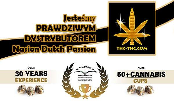 dystrybutor, dutch passion, nasiona marihuany, konopi