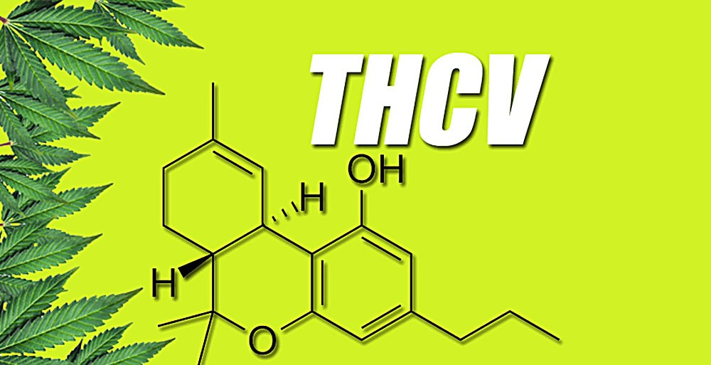 THCV, THCA, THC, CBD, CBN, Kannabinoid, Tetrahydrokannabinol