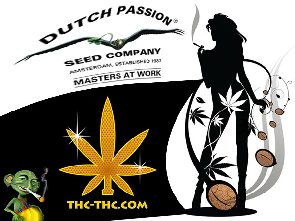 nasiona marihuany, nasiona konopi, dutch passion, thc-thc