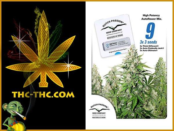 nasiona, marihuany, konopi, high, potency, autoflower, mix, feminizowane, dutch, passion
